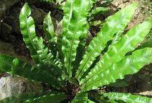rośliny - detale