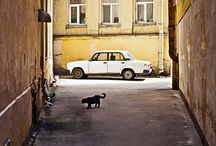 St Petersburg / by Charlotte McKid