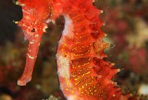 Marine Life's Beauty / Fishes, Marine Plants and Species