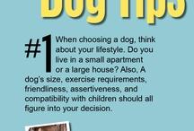 Dog Tips & Advice