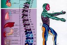 Med: Spine