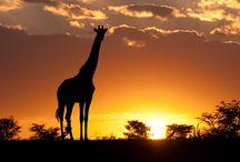 The Masai Mara / Amazing Masai Mara in Kenya