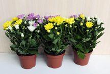 plantas que oxigenan