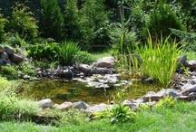 Tuin waterpartijen