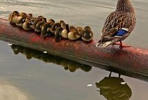 In a row / by Mary Drayna
