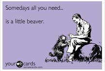 Beaver Stuff