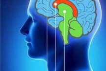 Het menselijke brein / Het menselijk brein is heel complex. En zo interessant. Begrijp je een beetje de werking hiervan leer je ook de mensen beter begrijpen.
