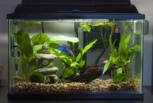 Fish Bowl/Tank Ideas