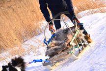 Nikita Kriukov / Cross-country skier