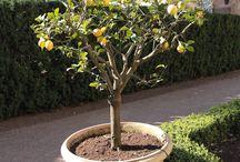 Fun Pictures for Lemon Tree / Interesting images for Lemon Tree Learning Centre