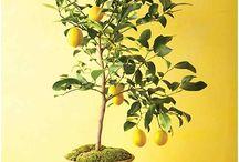 citrcos