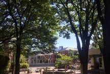海老さまの風景写真 / 海老さまの散歩写真