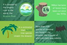 Amazon Rainforest Infographic / Infographics regarding the Amazon jungle, the environment and its conservation.