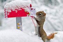 L'hiver et les animaux