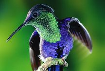 Beautiful Fauna
