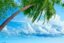 I am SO going to CRUISE the BAHAMAS! / Tastefully Simple's Silver Leaf Incentive Trip