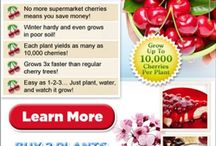 Grow Fruit, Fruit Drinks, Food with Fruit