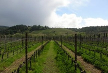 Wino / by Oregon Jamboree