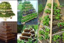 kertészeti