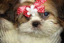 Gflina / Мои собачки  http://4lapu.jimdo.com/