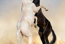 HORSES.........