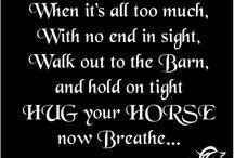 everything horsey