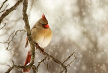 Birds of a Feather... / by Heather McFarland