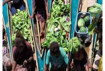 Home  Solomon Islands