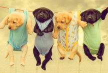 Puppies / by Kristin Harrigan