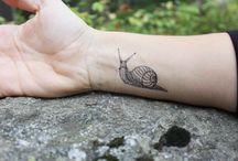 Snail Buddies