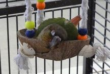 Psittacines / Conures, Macaws and other parrots