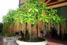 Mua bán Cây Xanh, Cây Công trình / Chuyên mua bán cây xanh, Cây công trình, Sân vườn, Đô thị, thiết kế thi công cảnh quan sân vườn