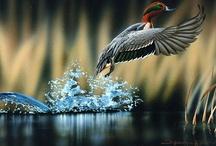 Nature's Beauty via Photography-Wildlife