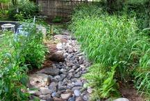 Landscape Water Drainage