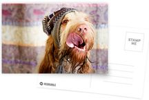 POSTCARDS - ITALIAN SPINONE / Buy any 8 and get 20% off, buy any 16 and get 30% off. 300gsm card with a satin finish. Supplied with kraft envelopes. Discount of 20% on every order of 8+ cards