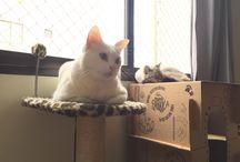 Gatos/Cats