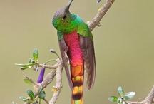 Πολύχρωμα πουλιά-amazing birds
