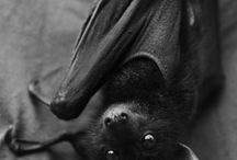 Bats / by Little Gothic Horrors