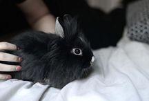 Django / My Bunny
