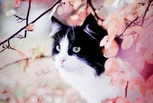 Søte kattunger/katter