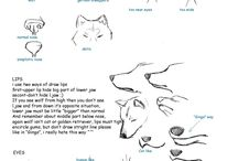 Wolf drawing turtorial