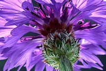 Flowers / by Paula Henson