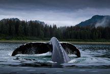 Canadá, Rocosas y Crucero por Alaska / Beatgers pone rumbo a Canadá y Alaska este agosto para conocer el verdadero espectáculo de la naturaleza.