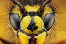 bijen en insecten