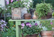 Cute Garden Ideas / by Elaine Sullivan