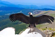 Wildlife South America