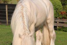 Koně....