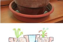 Köttätande växter