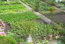 Κήπος με λαχανικά