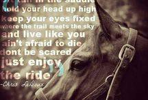 Quotes / Horse quotes